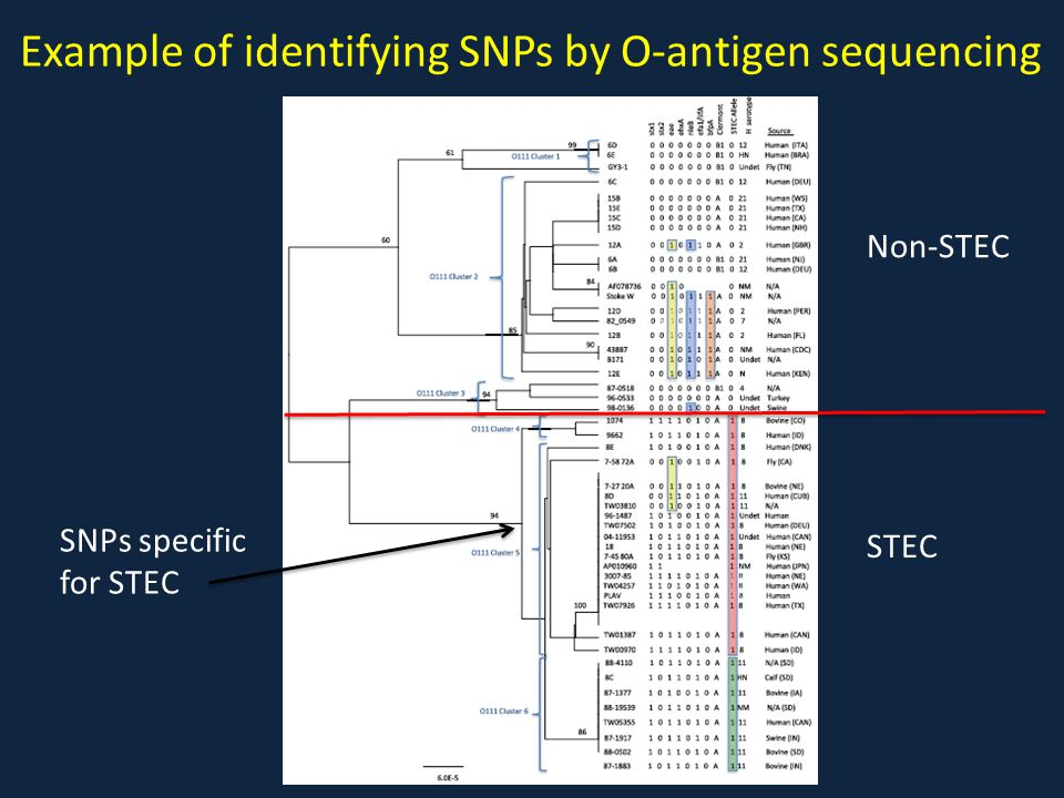 Example of identifying SNPs by O-antigen sequencing
