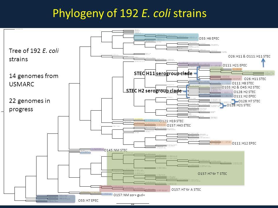 Phylogeny of 192 E. coli strains