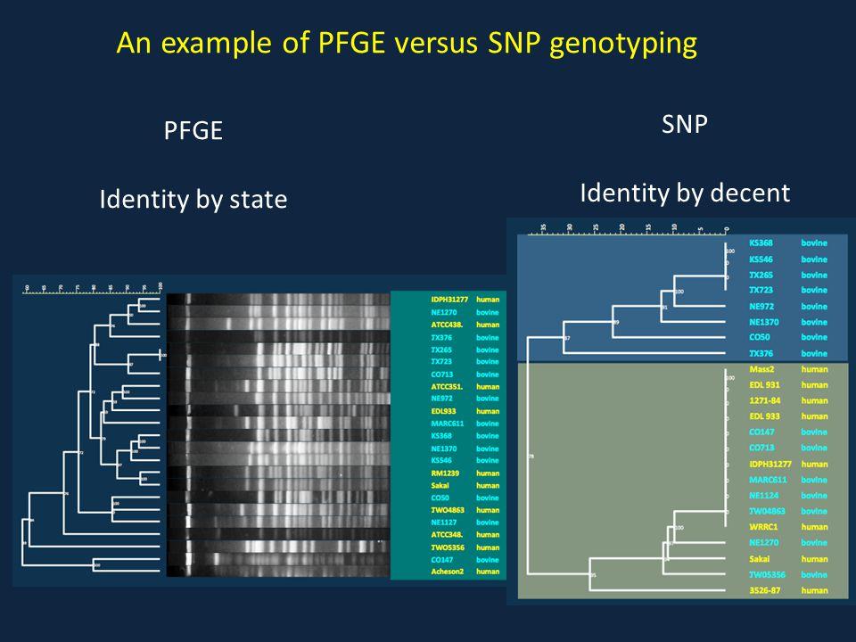 An example of PFGE versus SNP genotyping