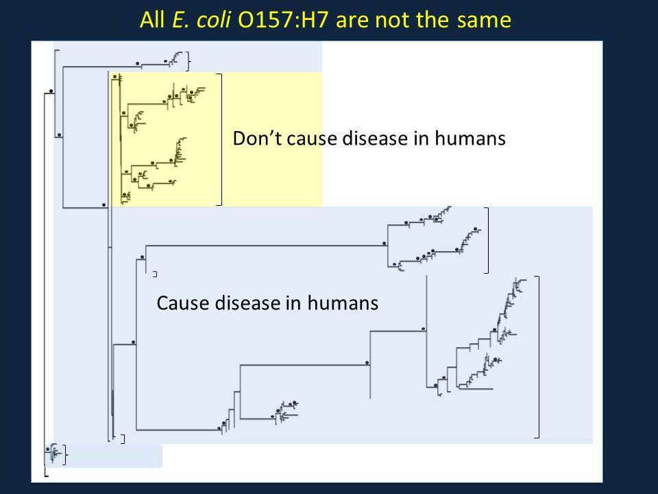 All E. coli O157:H7 are not the same