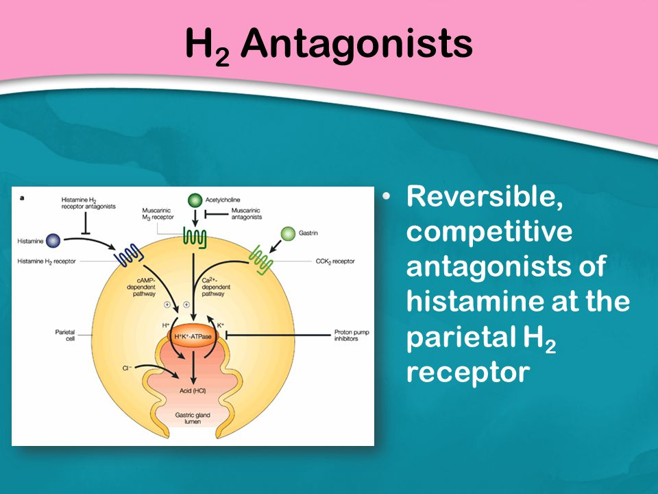 H2 Antagonists Reversible, competitive antagonists of histamine at the parietal H2 receptor