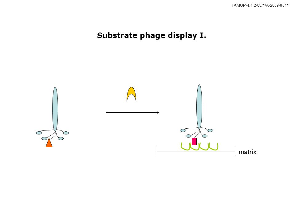 Substrate phage display I.