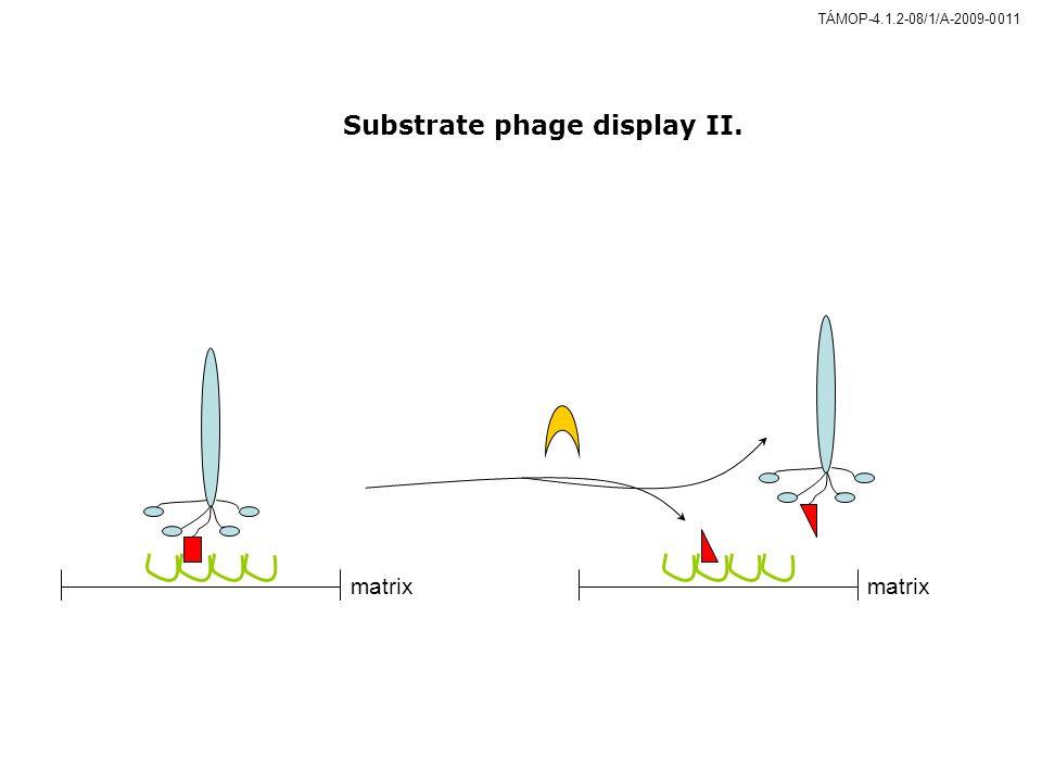 Substrate phage display II.