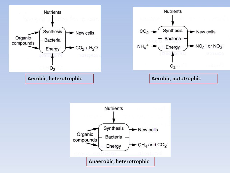 Aerobic, heterotrophic