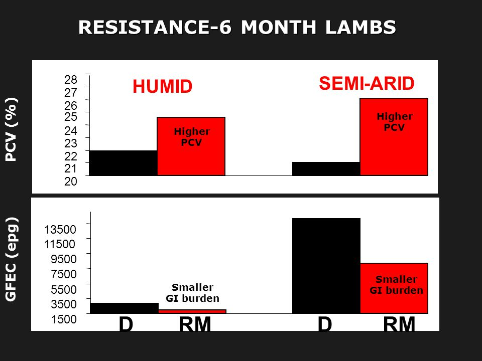 RESISTANCE-6 MONTH LAMBS
