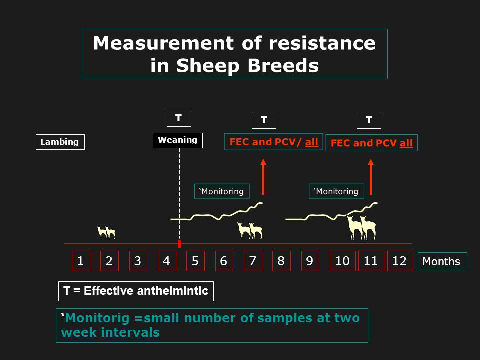 Measurement of resistance in Sheep Breeds
