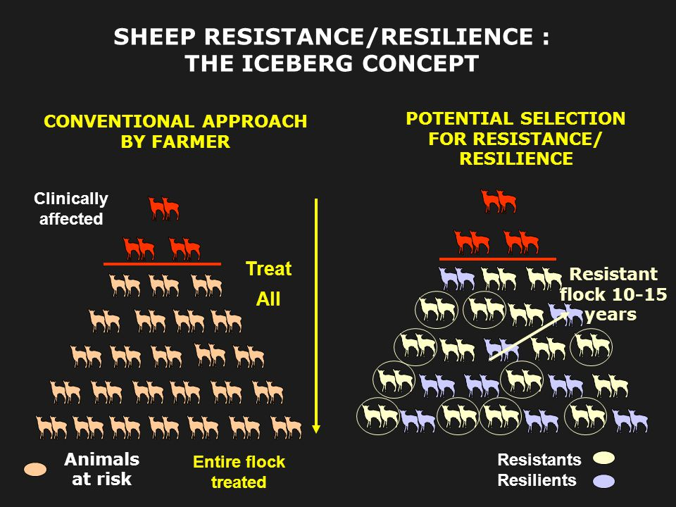 SHEEP RESISTANCE/RESILIENCE : THE ICEBERG CONCEPT