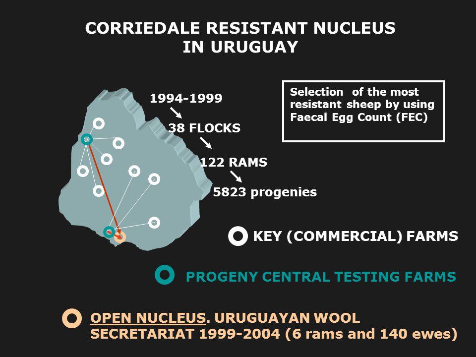 CORRIEDALE RESISTANT NUCLEUS