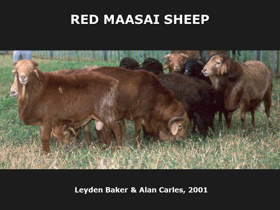 Leyden Baker & Alan Carles, 2001