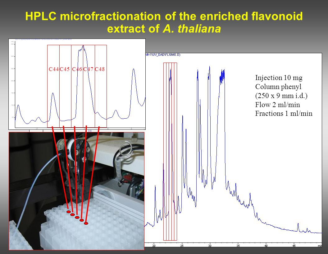 HPLC microfractionation of the enriched flavonoid extract of A