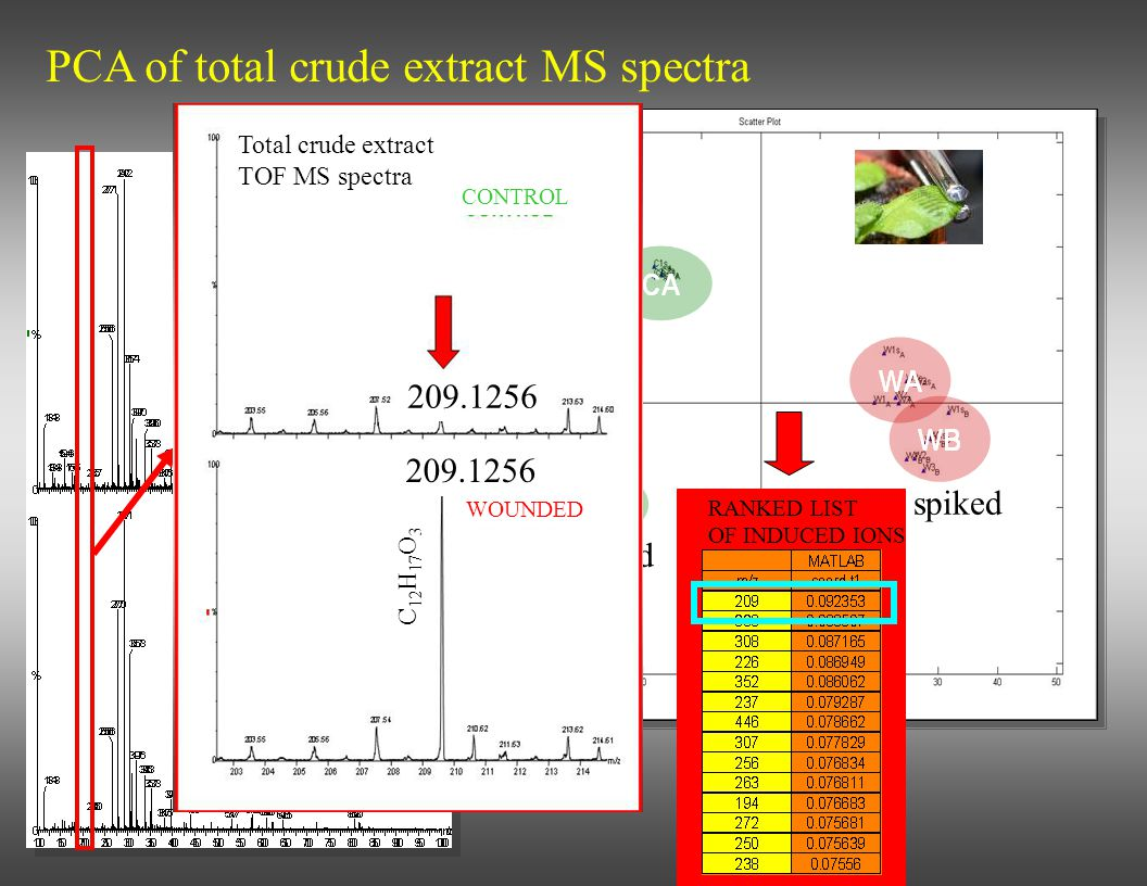 PCA of total crude extract MS spectra