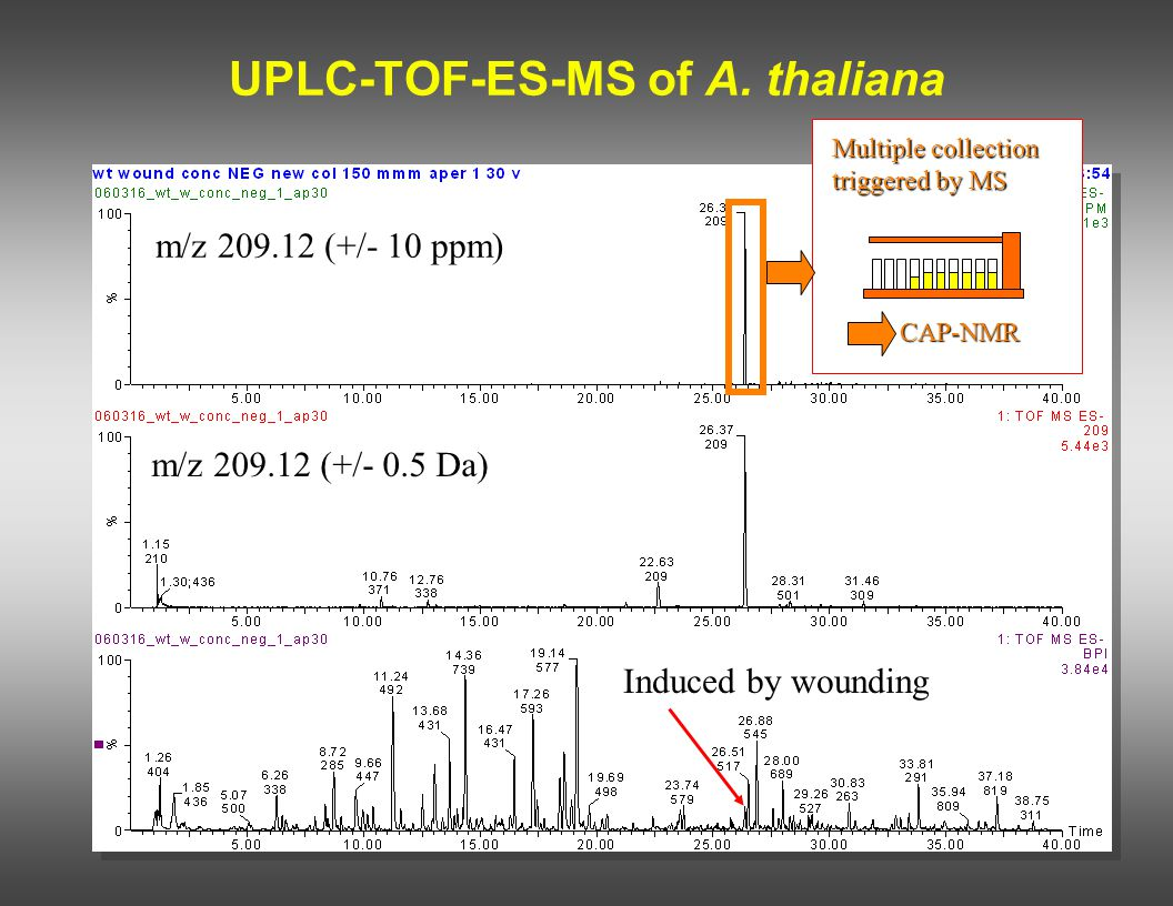 UPLC-TOF-ES-MS of A. thaliana