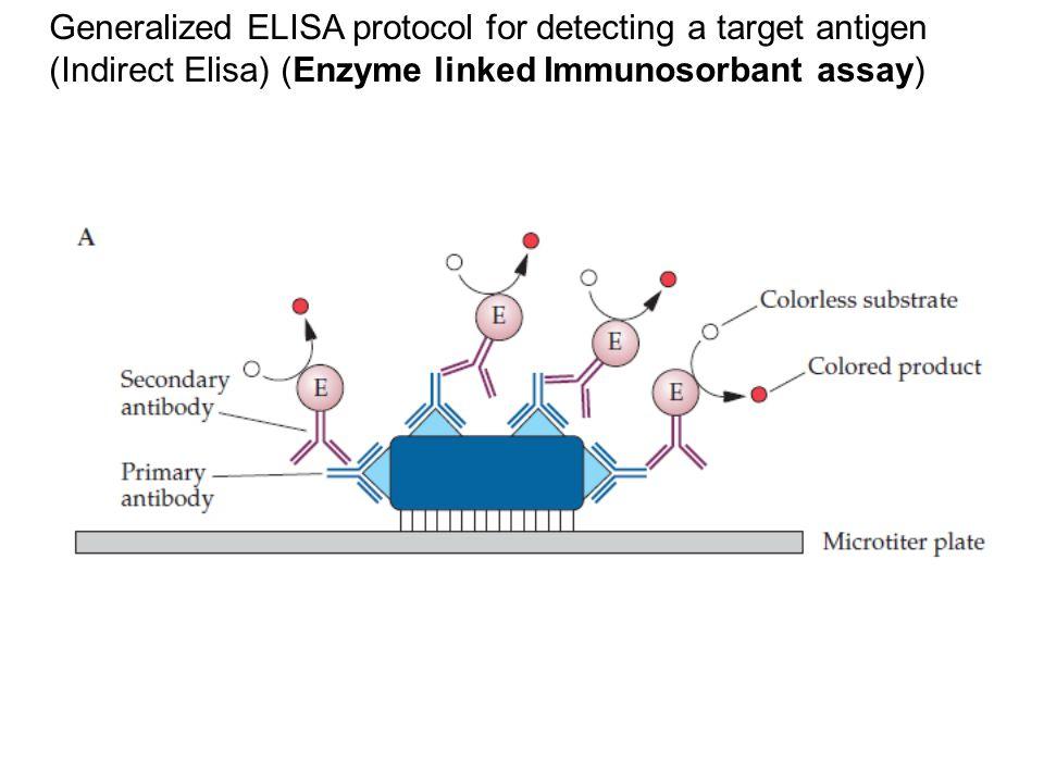 Generalized ELISA protocol for detecting a target antigen
