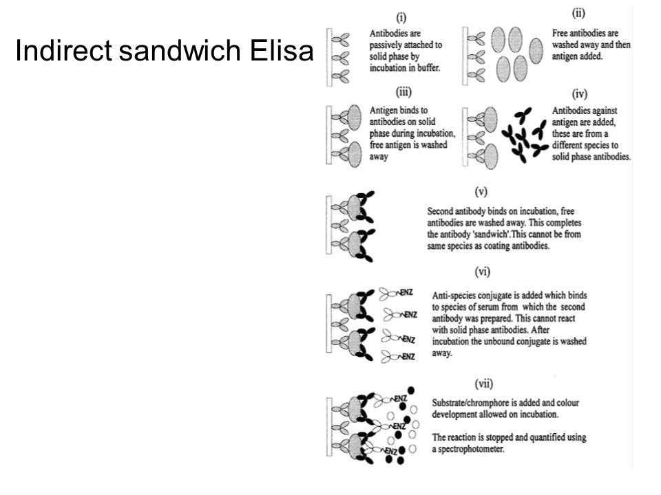 Indirect sandwich Elisa