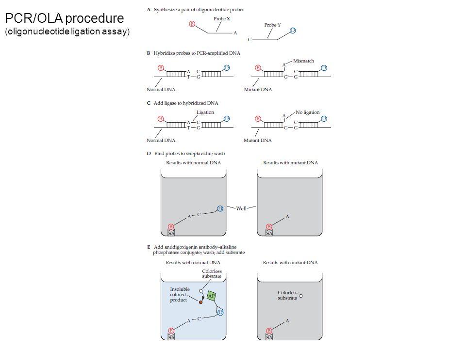 PCR/OLA procedure (oligonucleotide ligation assay)