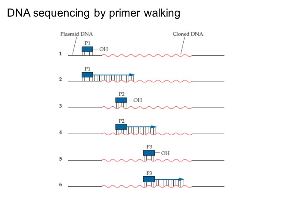 DNA sequencing by primer walking