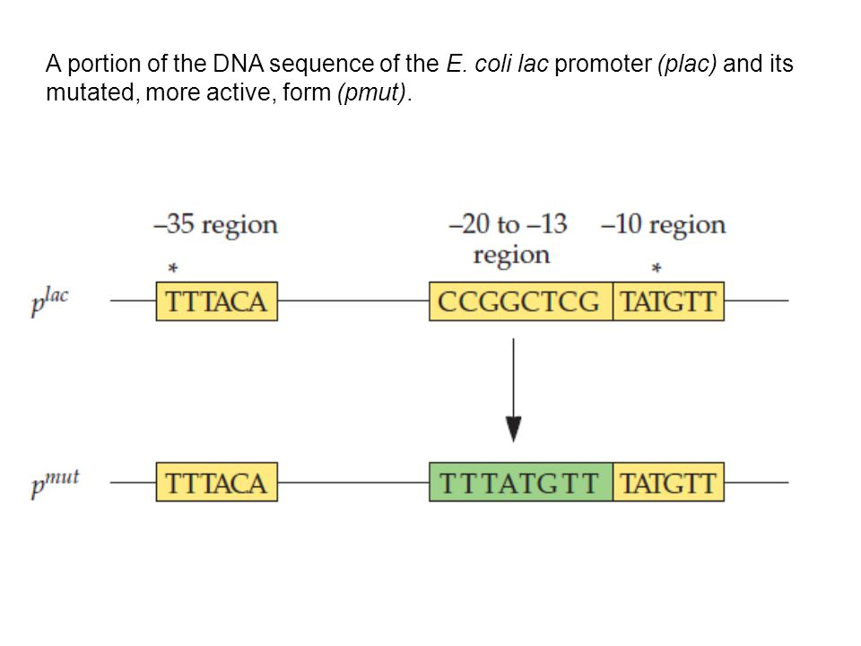 A portion of the DNA sequence of the E