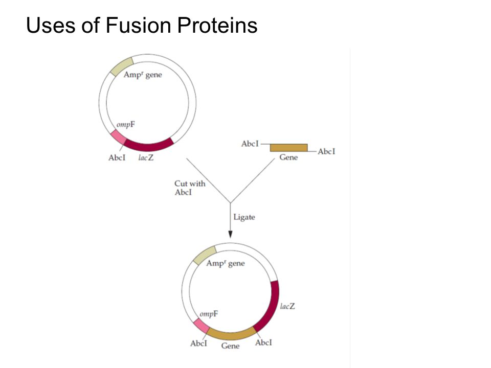 Uses of Fusion Proteins
