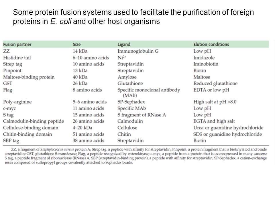 Some protein fusion systems used to facilitate the purification of foreign proteins in E.