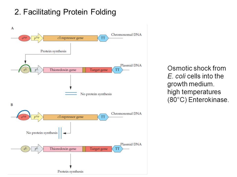 2. Facilitating Protein Folding