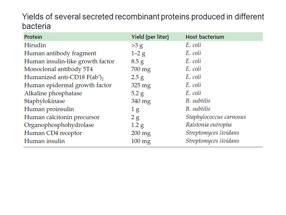 Yields of several secreted recombinant proteins produced in different bacteria