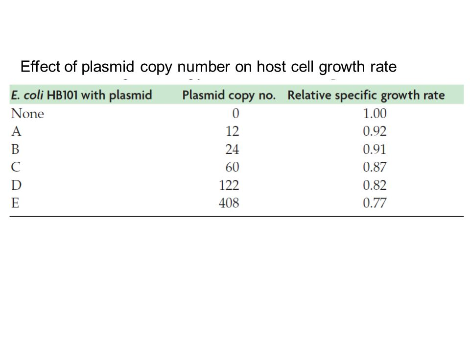 Effect of plasmid copy number on host cell growth rate