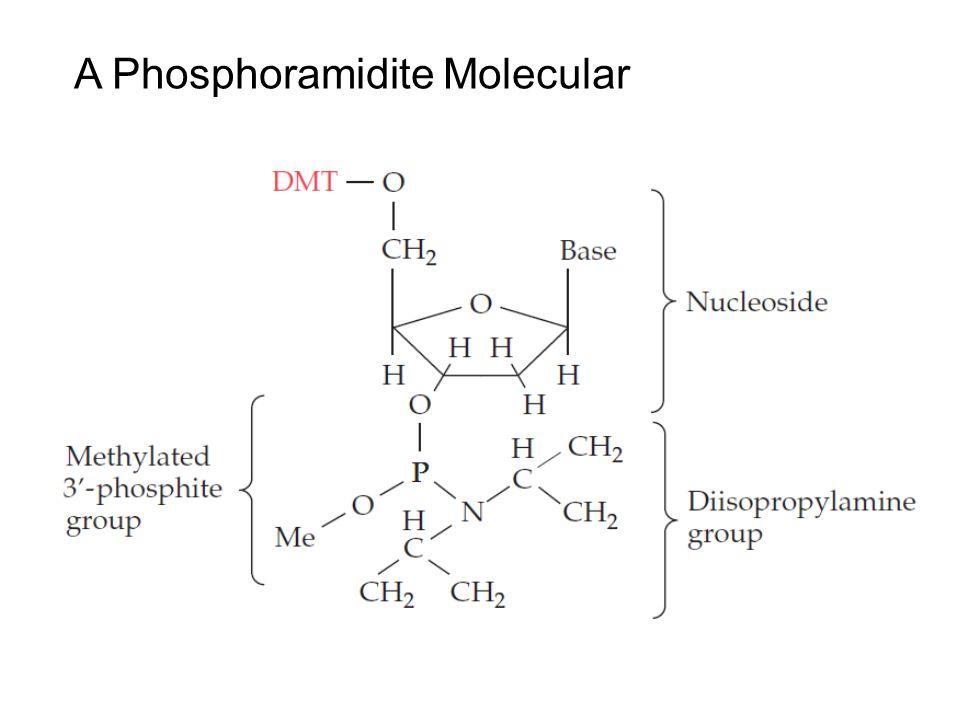 A Phosphoramidite Molecular