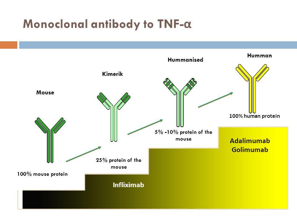 Monoclonal antibody to TNF-α
