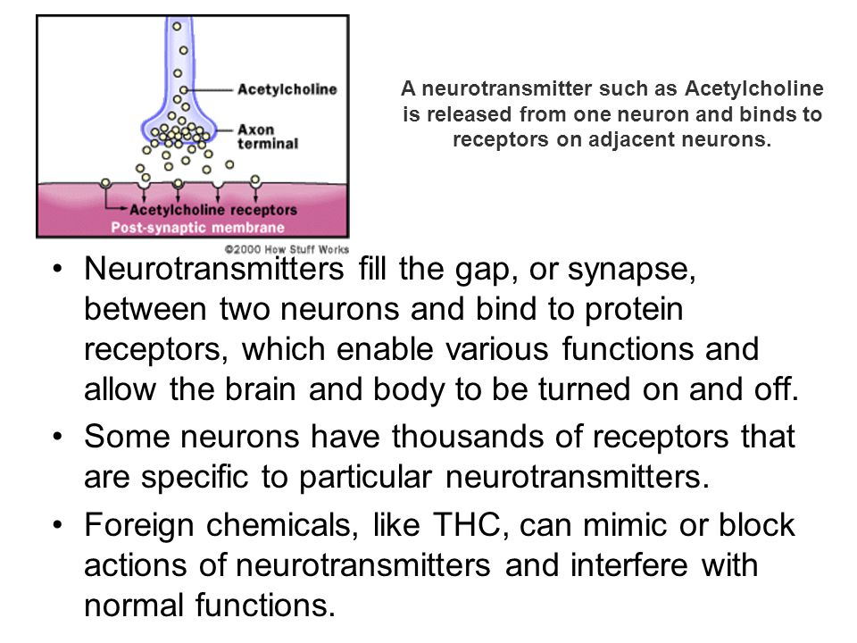 A neurotransmitter such as Acetylcholine is released from one neuron and binds to receptors on adjacent neurons.