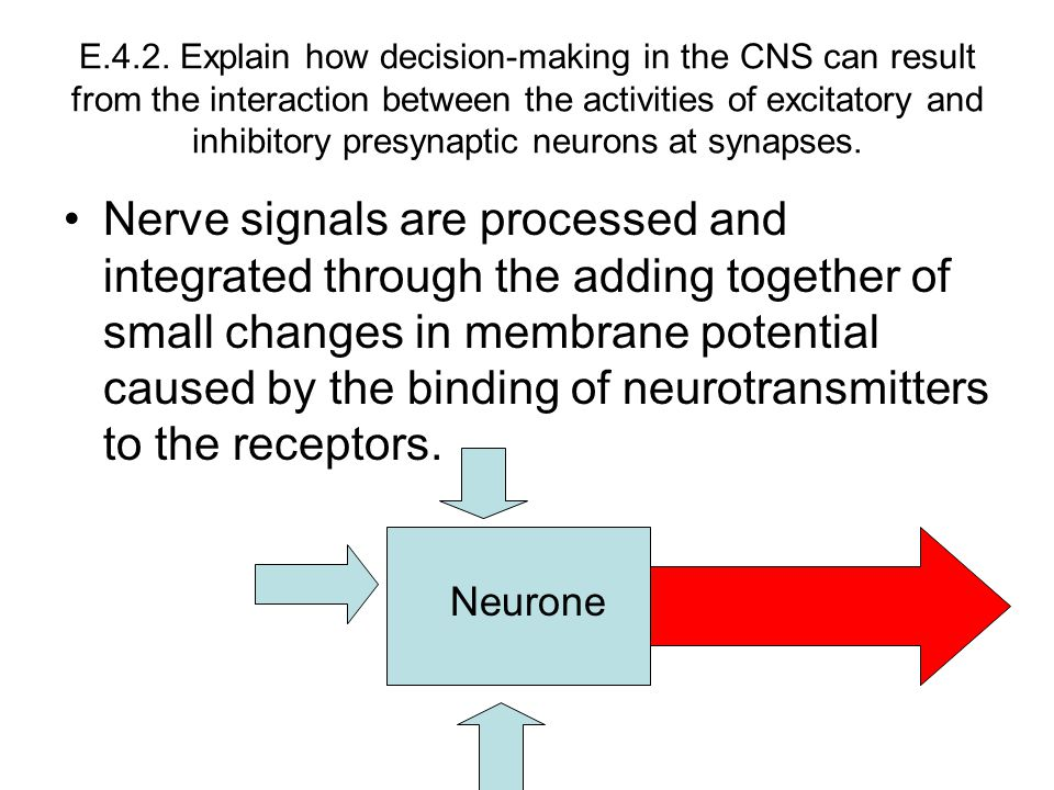 E.4.2. Explain how decision-making in the CNS can result from the interaction between the activities of excitatory and inhibitory presynaptic neurons at synapses.
