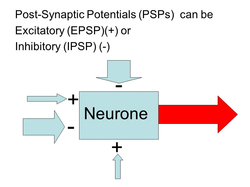 - - + + Neurone Post-Synaptic Potentials (PSPs) can be