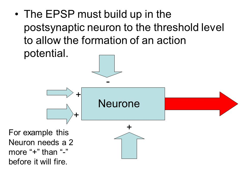 The EPSP must build up in the postsynaptic neuron to the threshold level to allow the formation of an action potential.