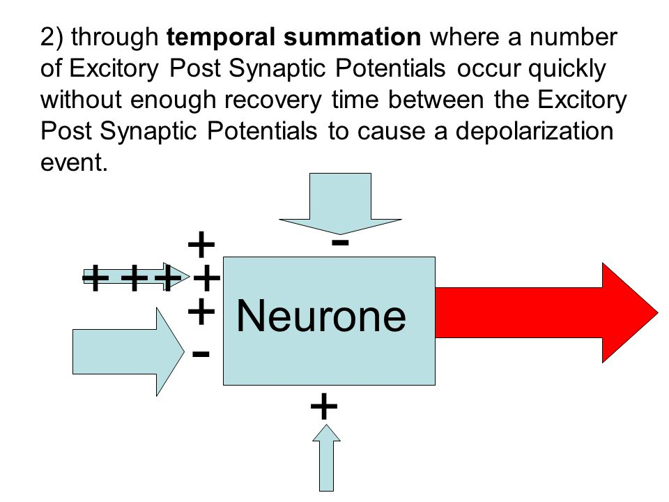 2) through temporal summation where a number of Excitory Post Synaptic Potentials occur quickly without enough recovery time between the Excitory Post Synaptic Potentials to cause a depolarization event.