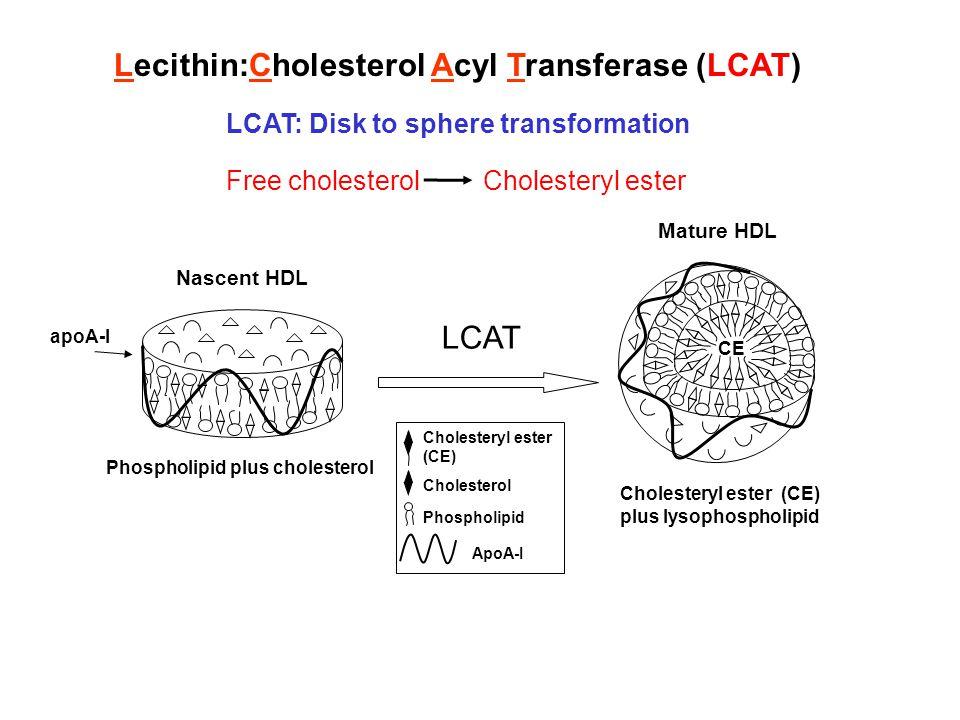 Lecithin:Cholesterol Acyl Transferase (LCAT)