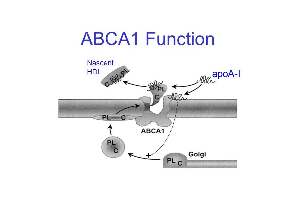 ABCA1 Function Nascent HDL apoA-I
