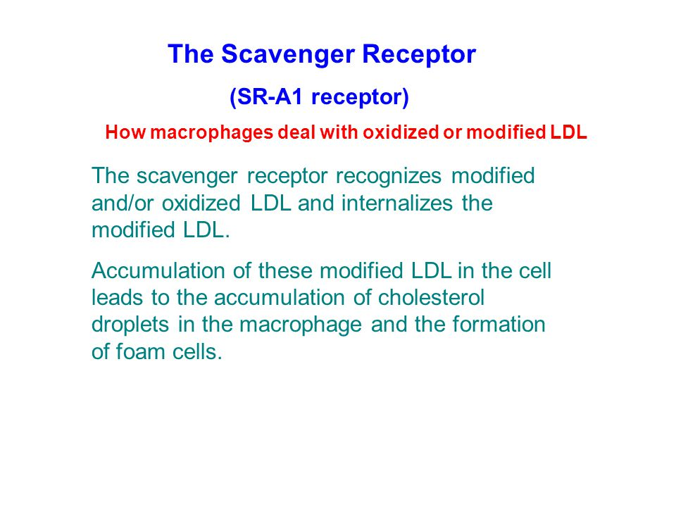 The Scavenger Receptor