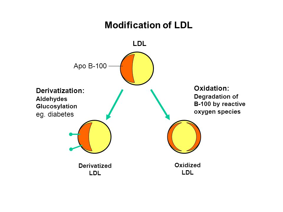 Modification of LDL LDL Apo B-100 Oxidation: Derivatization: