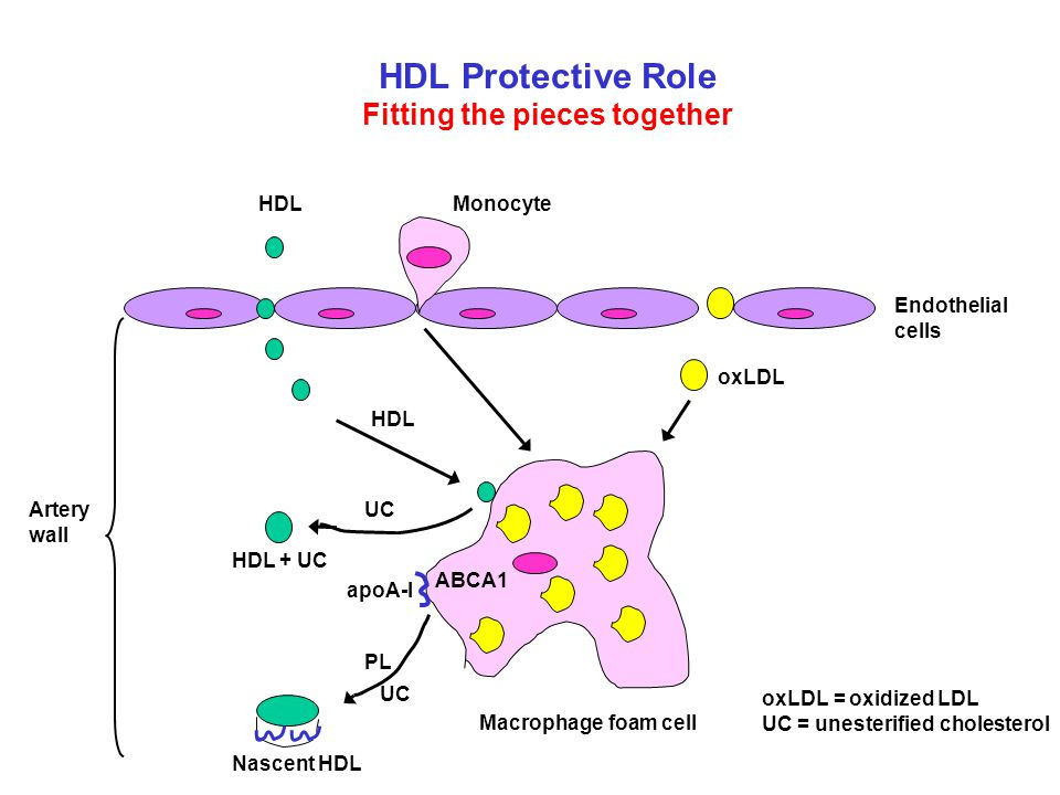 HDL Protective Role Fitting the pieces together