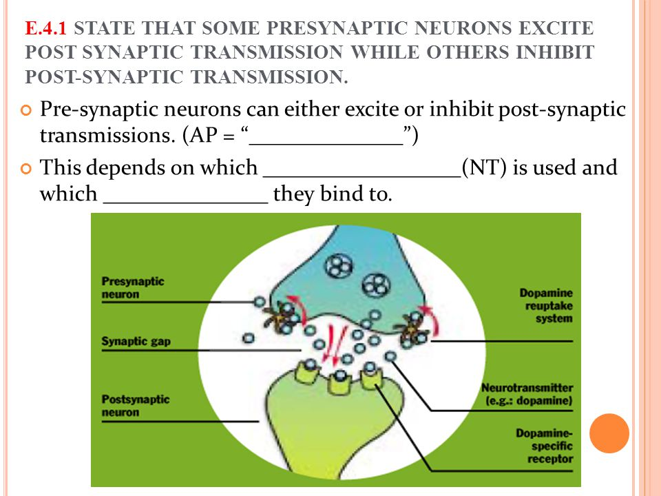 E.4.1 STATE THAT SOME PRESYNAPTIC NEURONS EXCITE POST SYNAPTIC TRANSMISSION WHILE OTHERS INHIBIT POST-SYNAPTIC TRANSMISSION.