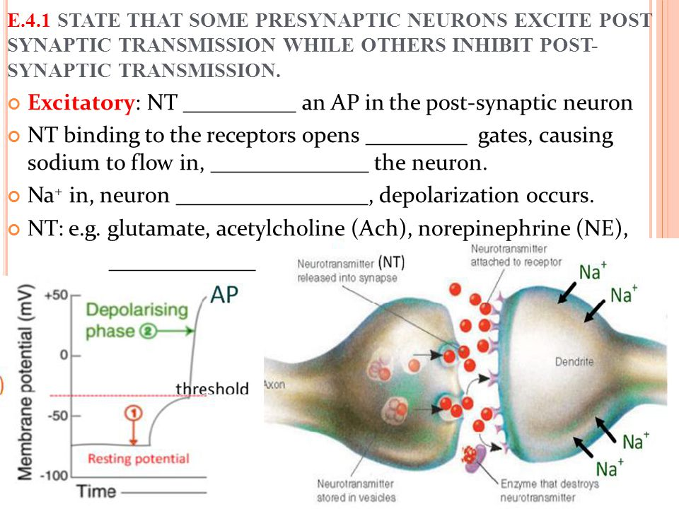 Excitatory: NT __________ an AP in the post-synaptic neuron