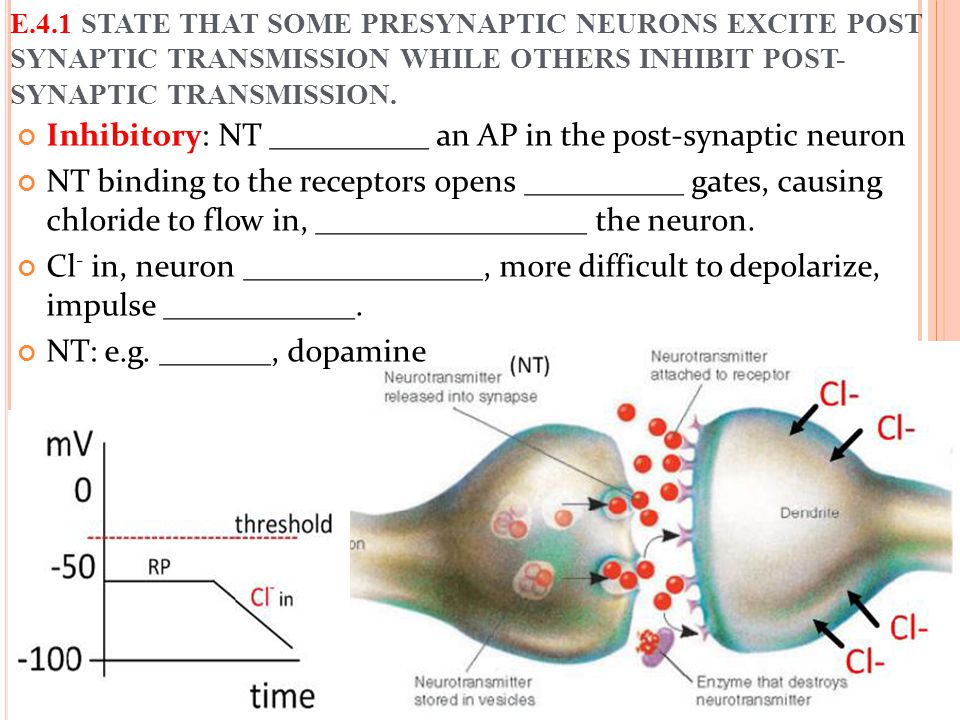 Inhibitory: NT __________ an AP in the post-synaptic neuron