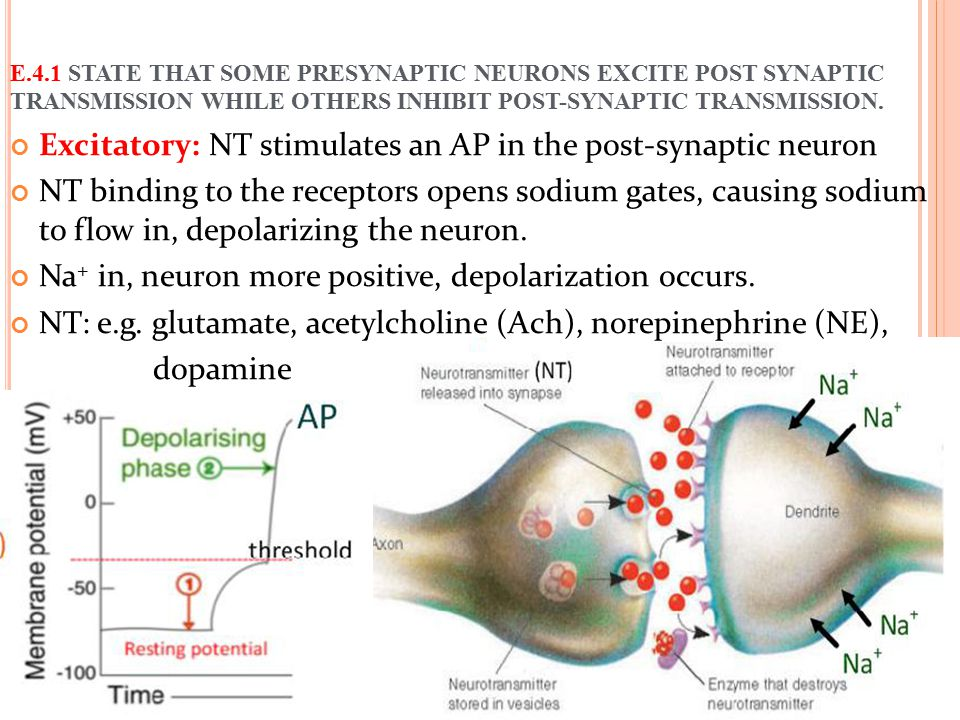 Excitatory: NT stimulates an AP in the post-synaptic neuron