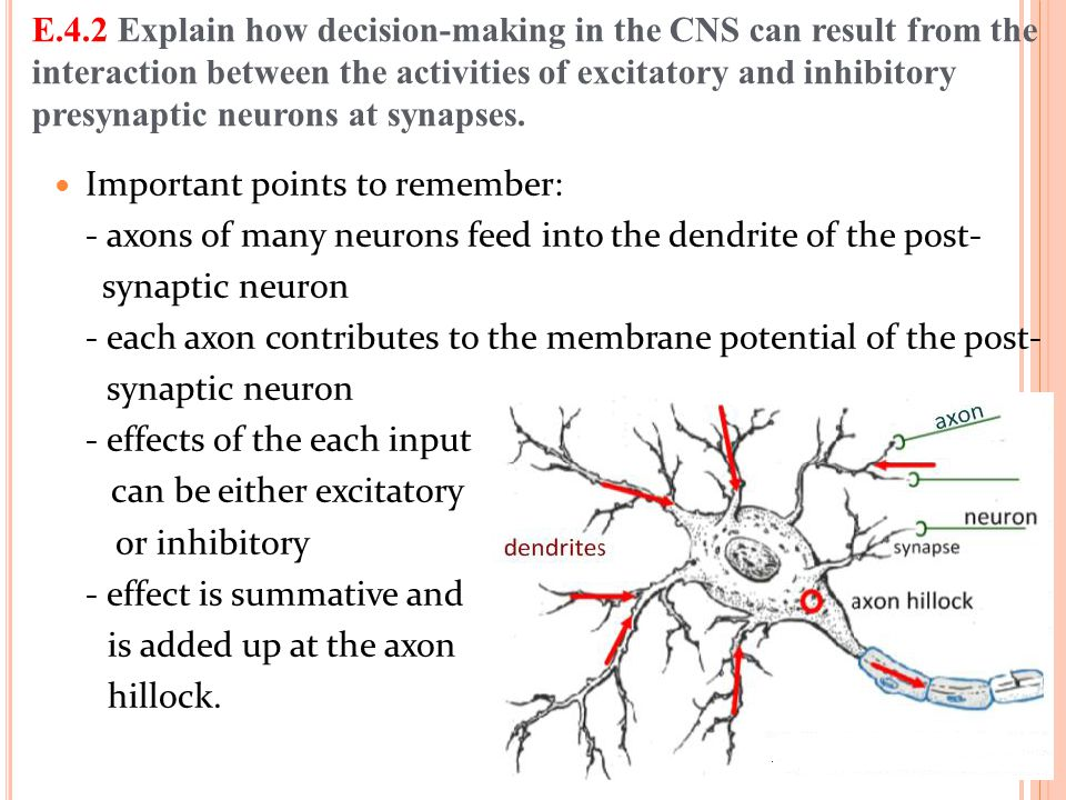 E.4.2 Explain how decision-making in the CNS can result from the interaction between the activities of excitatory and inhibitory presynaptic neurons at synapses.