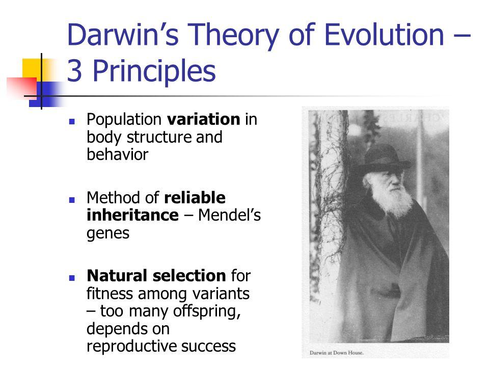 Darwin's Theory of Evolution – 3 Principles