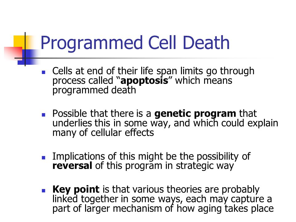Programmed Cell Death Cells at end of their life span limits go through process called apoptosis which means programmed death.