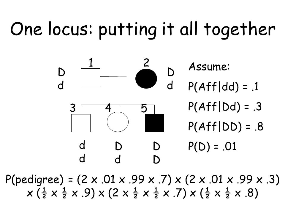 One locus: putting it all together