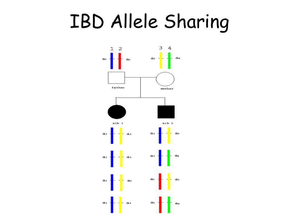 IBD Allele Sharing