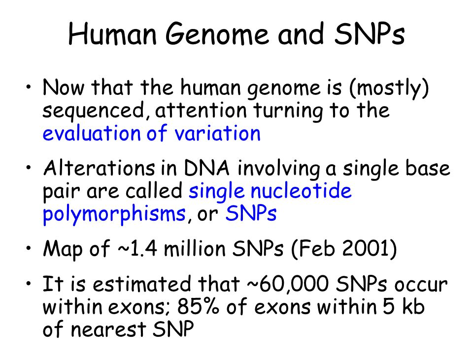 Human Genome and SNPs Now that the human genome is (mostly) sequenced, attention turning to the evaluation of variation.