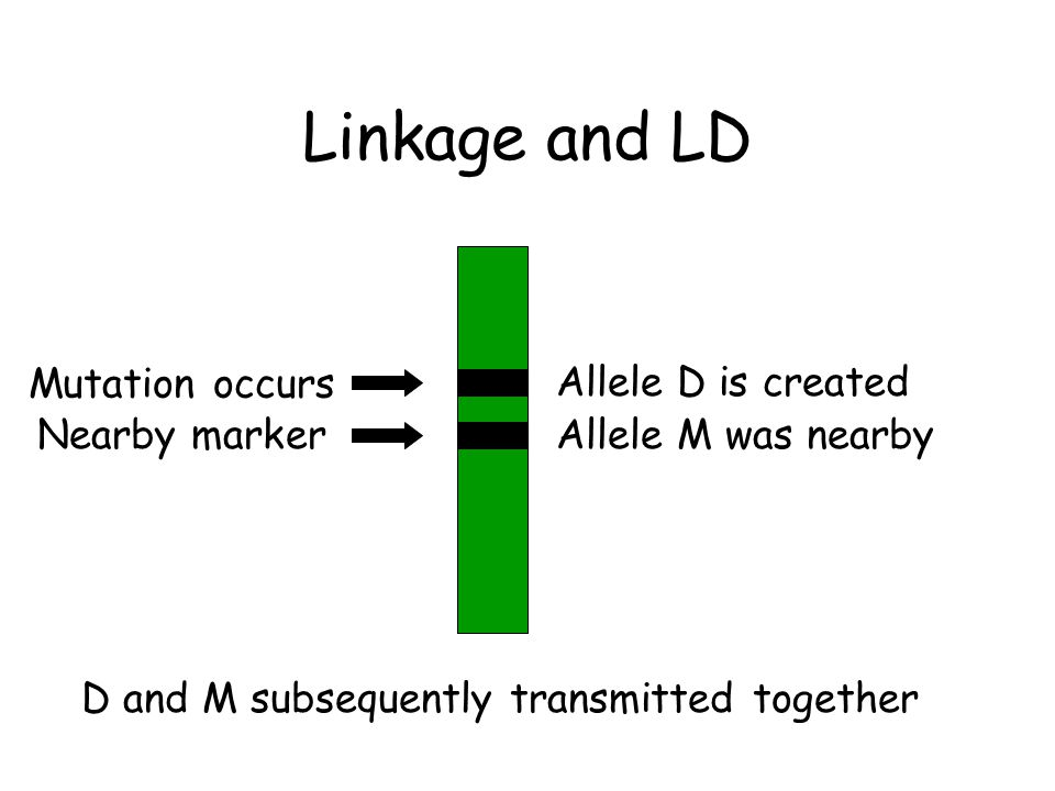 Linkage and LD Mutation occurs Allele D is created Nearby marker