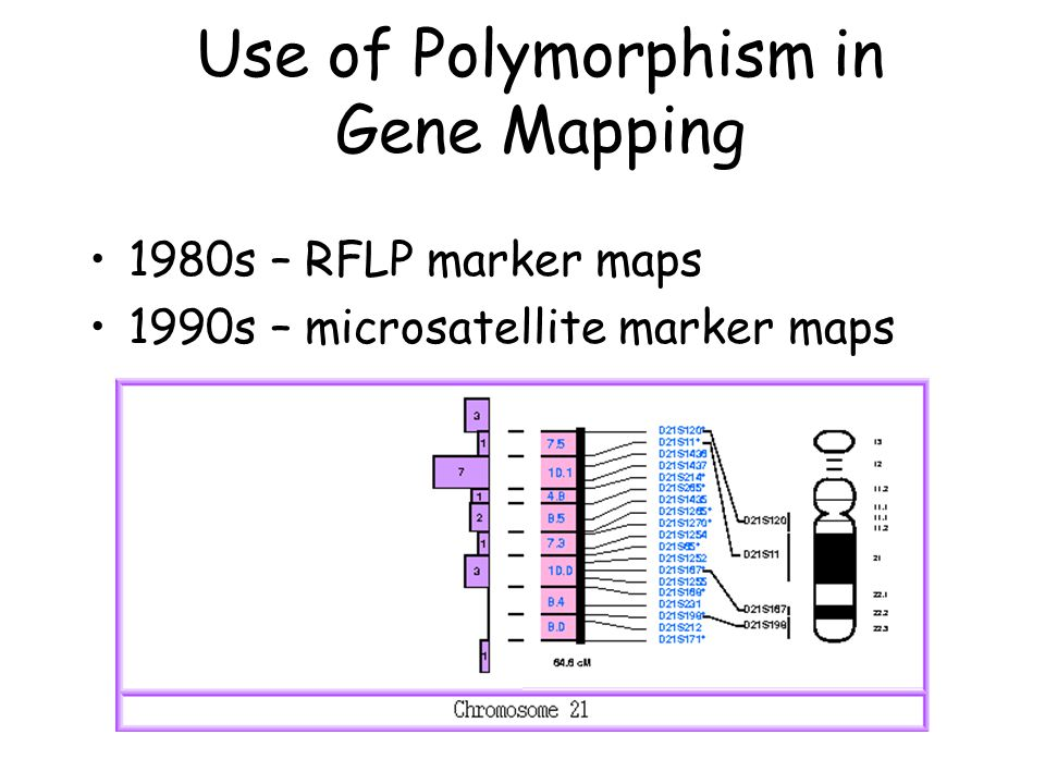 Use of Polymorphism in Gene Mapping